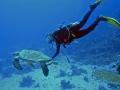 mare a cebu tartarughe marine